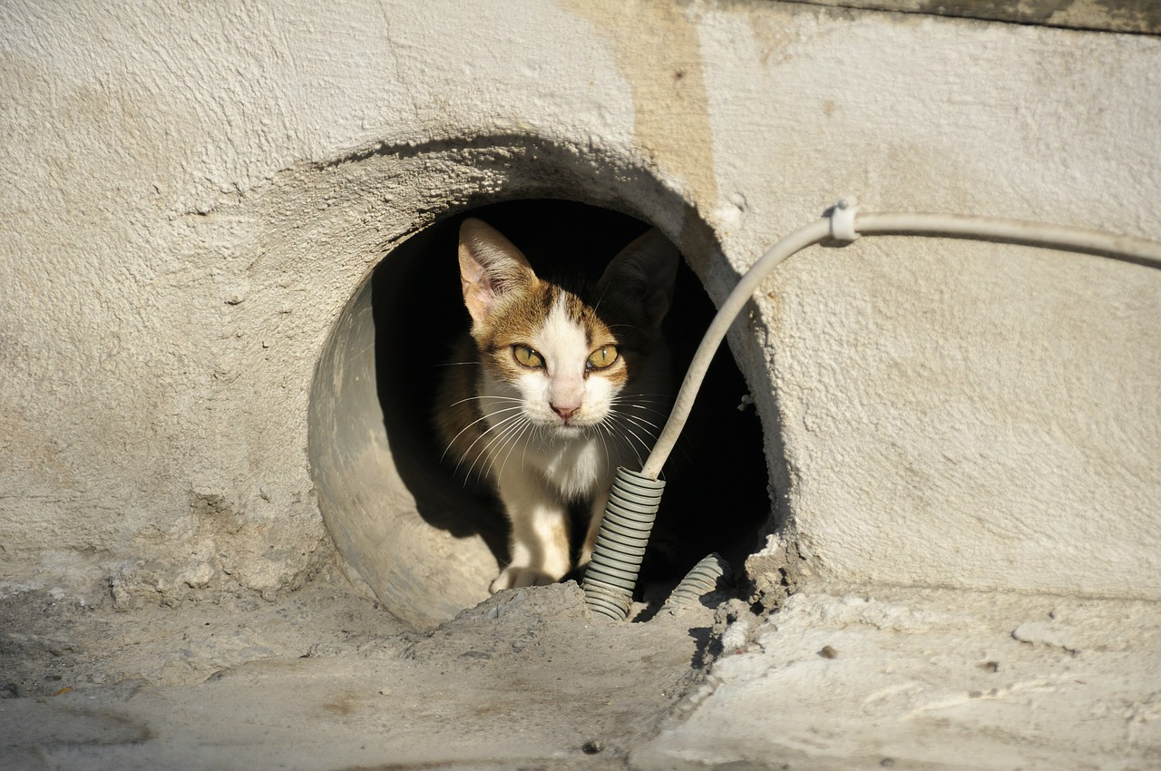 https://360tv.ru/media/uploads/article_images/2018/04/272_stray-cat-169113_1280.jpg